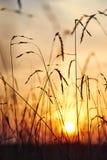 Ansicht des Sonnenuntergangs durch das Gras stockbild