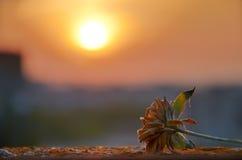 Ansicht des Sonnenuntergangs und der Blume stockbilder