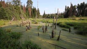 Ansicht des Sumpfes in der Wildnis Ruhiger Platz für Entspannung stock video