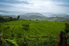 Ansicht des terassenförmig angelegten Reisfeldes am bewölkten Tag an Bong Piang-Wald in Chiang Mai, Thailand stockfotografie