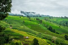 Ansicht des terassenförmig angelegten Reisfeldes an Bong Piang-Wald in Chiang Mai, Thailand stockfoto