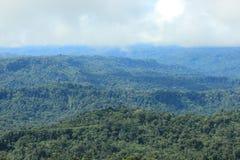 Ansicht des tropischen Regenwaldes und der Wolken, die einziehen stockbilder