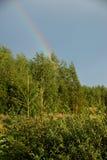 Ansicht des Waldes und des Regenbogens Stockbilder