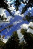 Ansicht des Waldes von unterhalb Stockfotografie