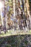 Ansicht des Waldrandes, unscharfer Hintergrund lizenzfreie stockfotos