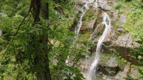Ansicht des Wassers des Wasserfalls im Wald stock footage