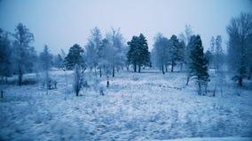 Ansicht des Winterwaldes vom Fenster eines beweglichen Zugs stock video