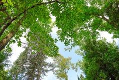 Ansicht, die oben den Treetops betrachtet Stockfotos