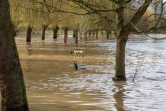 Ansicht durch Bäume der umfangreichen Überschwemmung in BRITISCHEN Midlands Stratford nach Avon stockfotografie