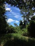 Ansicht durch Bäume, Fazenda, Sao Paulo Stare Brazil lizenzfreie stockbilder