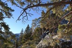 Ansicht durch Bäume zum Himmel stockfotografie