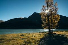 Ansicht durch Baum auf See Akkem nahe Berg Belukha lizenzfreies stockfoto