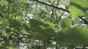 Ansicht durch Blätter stock video