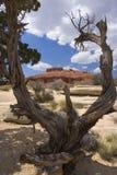 Ansicht durch den Baum Lizenzfreie Stockfotografie