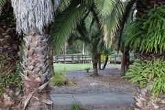 Ansicht durch die Bäume Stockfotos