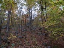 Ansicht durch die Bäume Stockbild