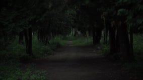 Ansicht durch dunklen gruseligen Wald stock video
