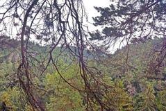 Ansicht durch eine Verwicklung von Niederlassungen im Wald Stockfotos