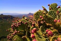 Ansicht durch stachelige Birnen-Kaktus Lizenzfreies Stockfoto