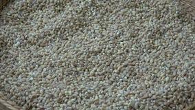 Ansicht in einen Korb voll von Weizenkörnern Weizen-Körner Weizen und Getreide stock video footage