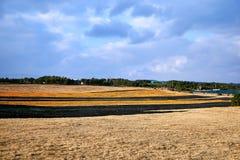 Ansicht einer Ranch in Jeju-Insel, in der Tangerineschalen auf dem Feld ausgebreitet werden, um zu trocknen stockbild