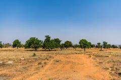 Ansicht einer trockenen Landschaft mit vielem Feigenbaum auf einem trockenen Gebiet des ländlichen Dorfs Stockbilder