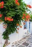 Ansicht einer typischen schmalen Straße in der alten Stadt von Naoussa, Paros-Insel, die Kykladen lizenzfreies stockfoto