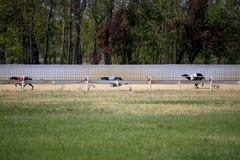 Ansicht einer Windhundrennstrecke mit laufenden Hunden Lizenzfreie Stockfotos