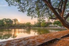 Ansicht eines enormen Baums mit See in Bangkok-Stadt, Thailand lizenzfreies stockfoto
