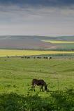 Ansicht eines Esels Stockfoto