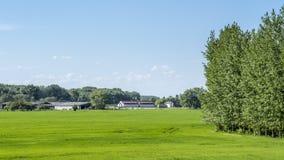 Ansicht eines Feldes des Kornes mit einem Bauernhof im Hintergrund Lizenzfreie Stockbilder