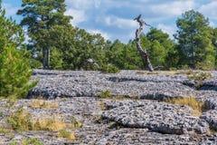 Ansicht eines geologischen Felsenparkpanoramas Lizenzfreie Stockfotos