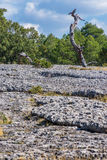 Ansicht eines geologischen Felsenparkpanoramas Stockbilder