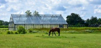 Ansicht eines Glasgewächshauses in Holland Lizenzfreies Stockfoto