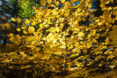 Ansicht eines Herbstwaldes Stockfotografie