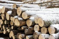 Ansicht eines Stapels Brennholzes Stockfotografie