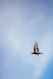Ansicht eines Vogelfliegens auf einem Hintergrund des blauen Himmels Stockfotos