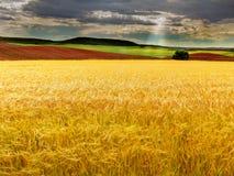 Ansicht eines Weizenfeldes II lizenzfreie stockfotografie