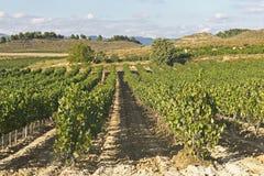 Ansicht eines wineyard in Rioja, Spanien Lizenzfreie Stockfotos
