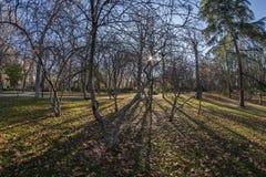 Ansicht Fisheye 180 eines Raumes im Retiro-Park in Madrid-Stadt Lizenzfreie Stockfotografie