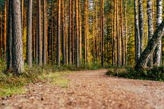 Ansicht Forest Roads, Überschrift tiefer im Wald lizenzfreies stockfoto