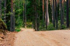 Ansicht Forest Roads, Überschrift tiefer im Wald stockfotos