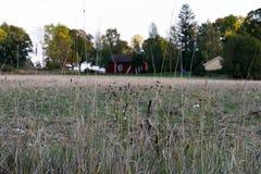 Ansicht mit Gras und Feld Stockbilder