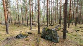 Ansicht mit Kiefern und Steinen Stockfotografie