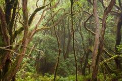 Ansicht in Naturpark von anaga Stockbild