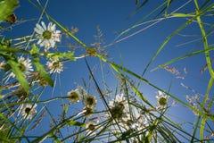 Ansicht oben in eine Blumenwiese Stockbild
