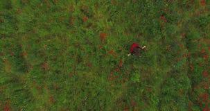 Ansicht oben von der jungen Frau, die in ein Mohnblumenfeld glücklich lächelt läuft Verbindung mit Natur Freizeit in der Natur stock footage