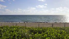 Ansicht am sonnigen Sandstrand in Miami in USA stock video footage
