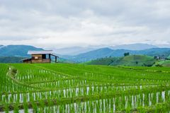 Ansicht terassenförmig angelegter Paddy Field im Mae-Stau-Dorf, Chaingmai lizenzfreies stockbild