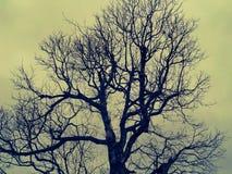 Ansicht vom Boden eines Baums mit grauem Hintergrund stockbilder